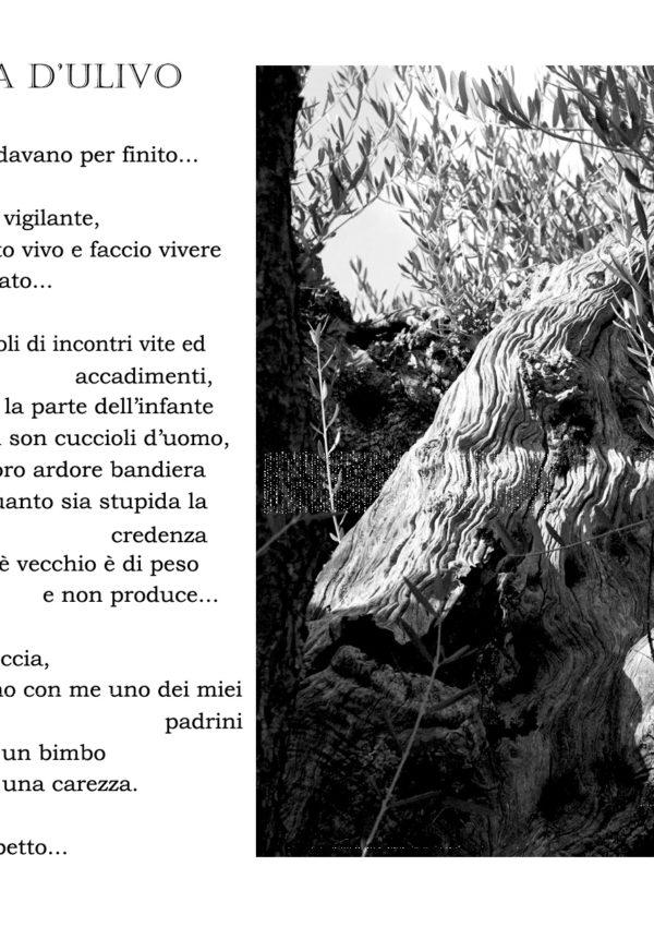 Ulivimmortali 2.0 – Roccia d'Ulivo