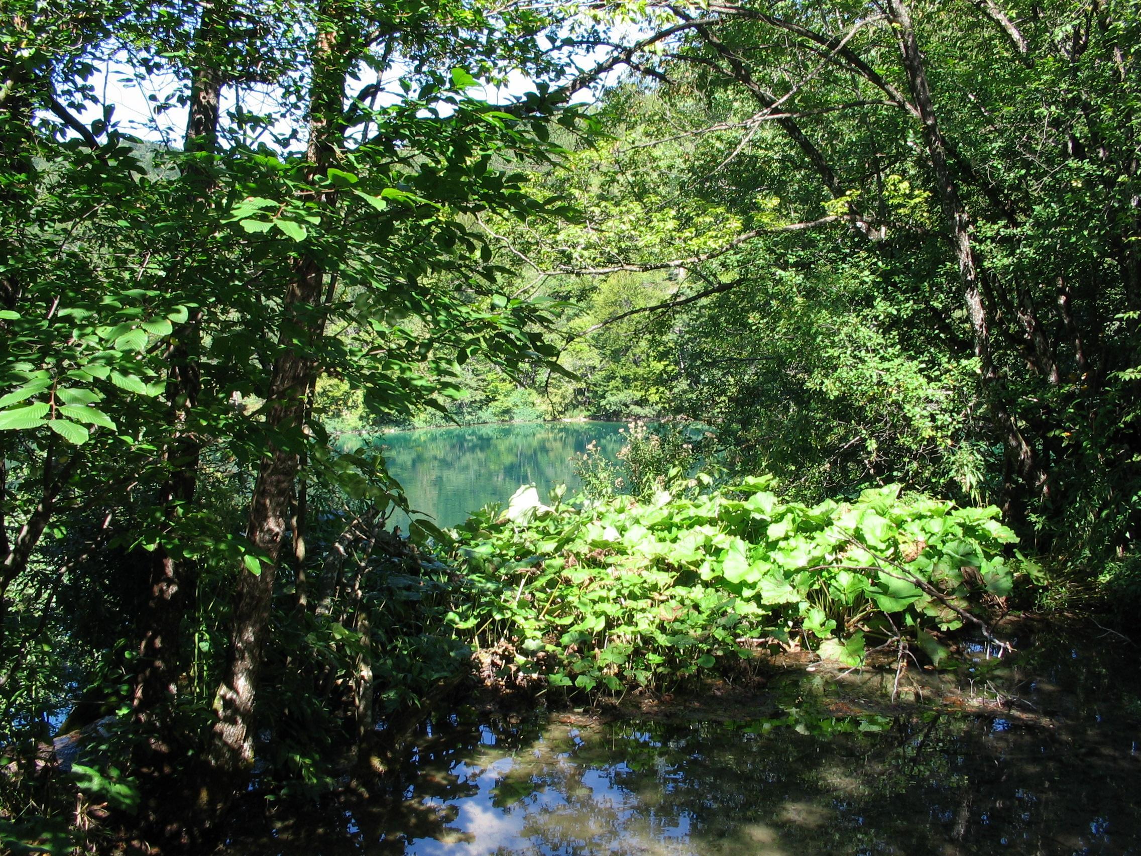 laghi di plitvice vegetazione