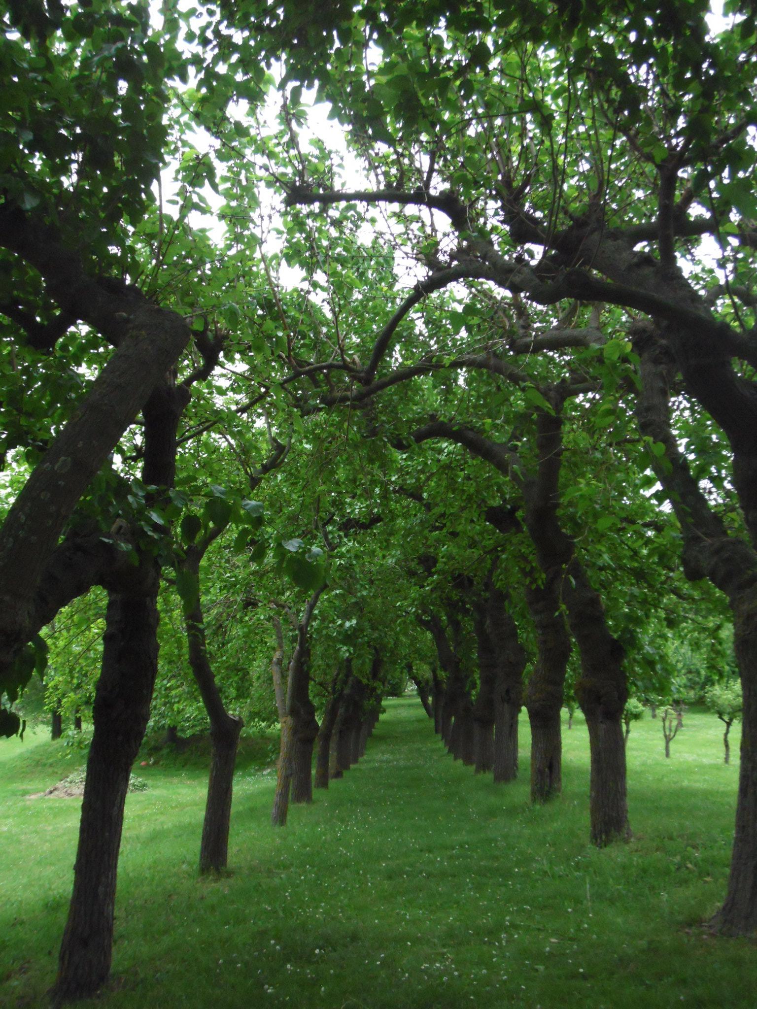 alberi da frutto collina dei poeti