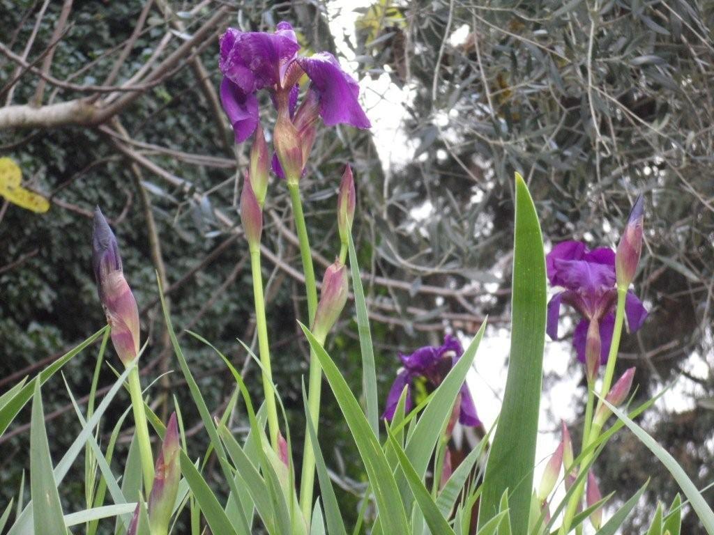 fiori bagno vignoni