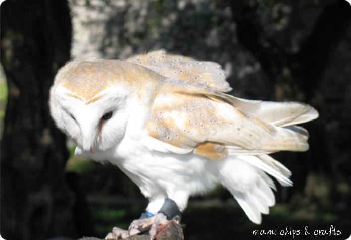 falconeria al castello di vezio