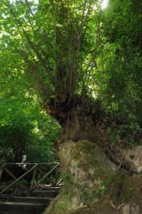 vegetazione circostante le cascate delle marmore