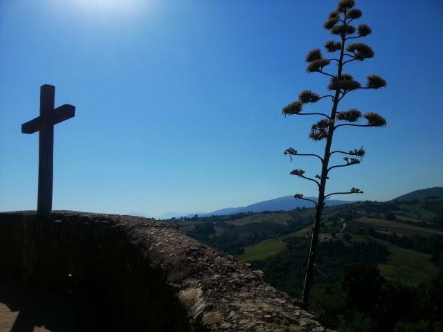 agave americana 3