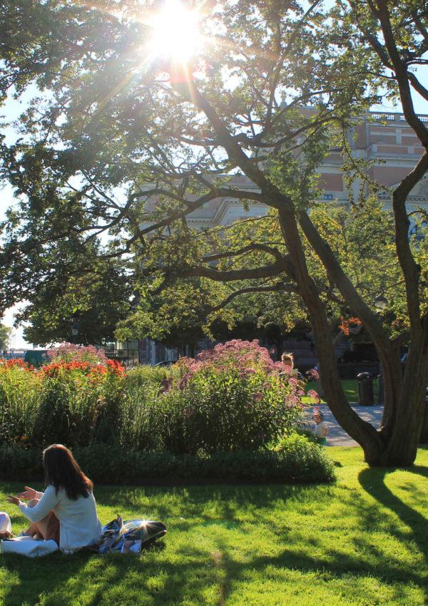 Cosa vedere a Stoccolma in un giorno
