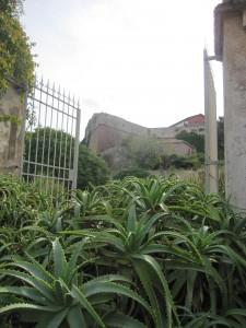 Le piante grasse nei giardini della Palazzina dei Mulini