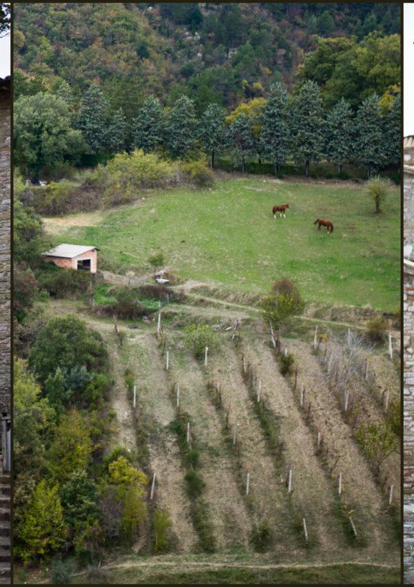 Frantoi Aperti: un weekend in Umbria (parte 2)