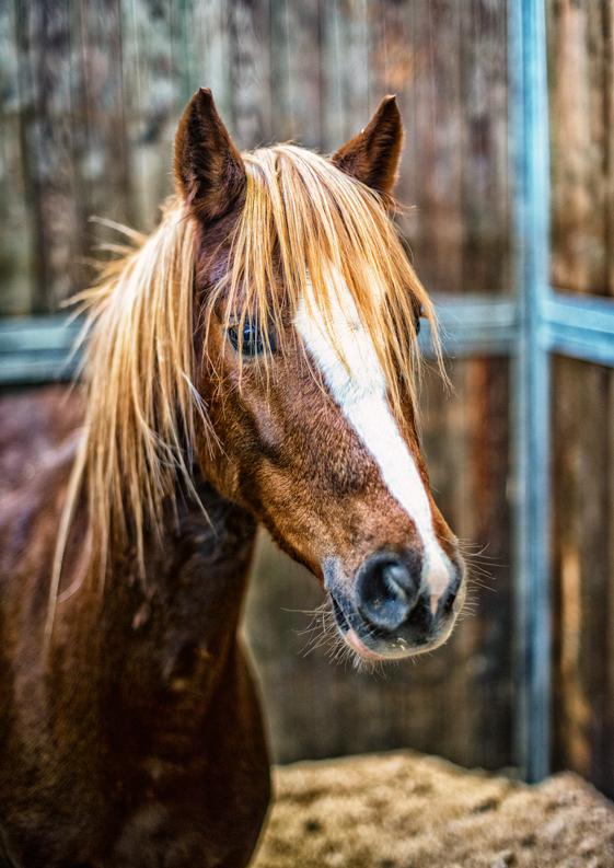 Fieracavalli 2013: cavalli protagonisti a Verona