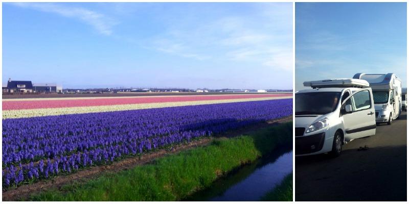 keukenhof campi di tulipani