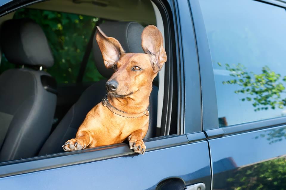 viaggiare-con-il-cane