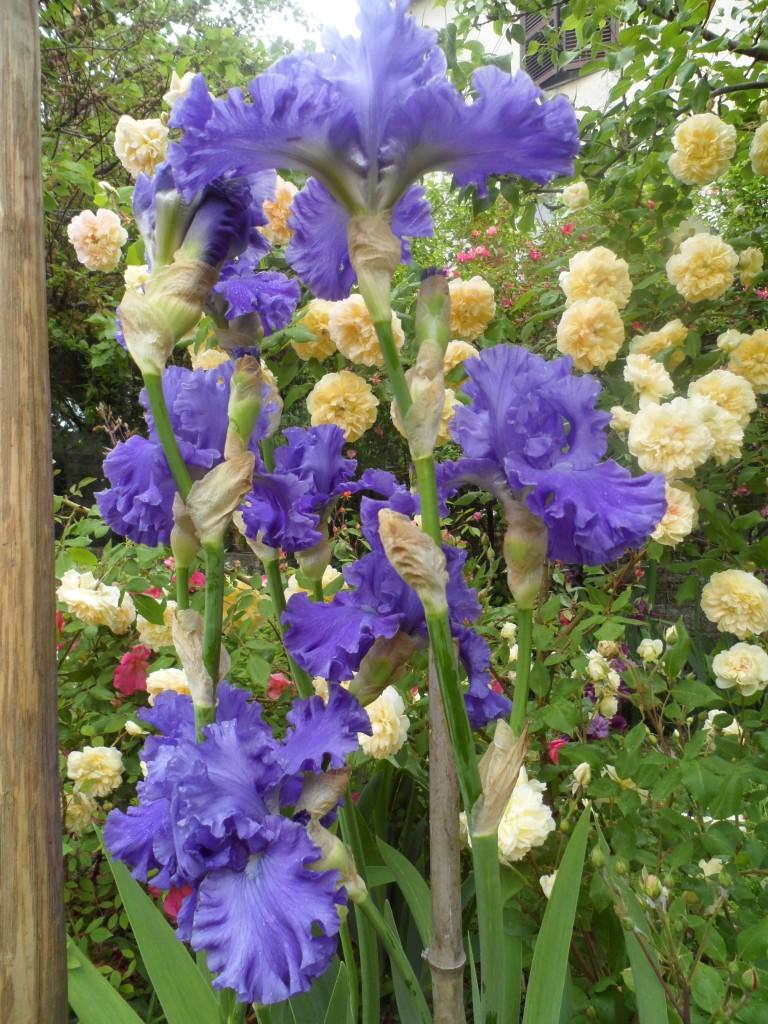 fiori 160