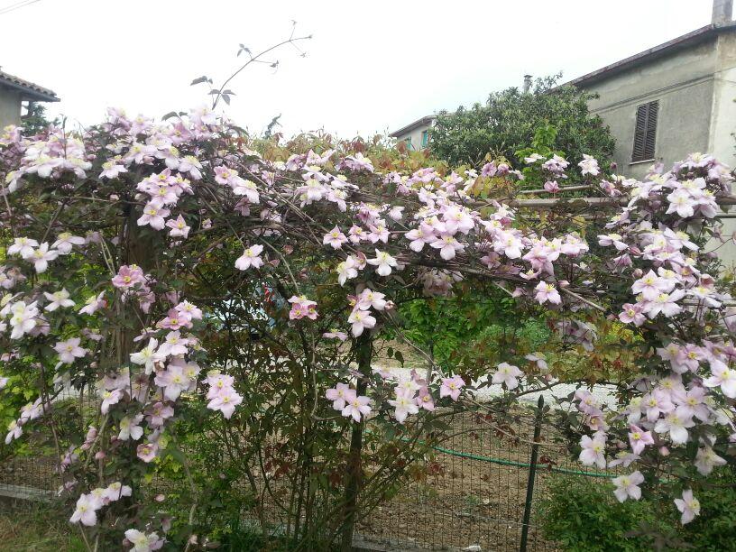 fiori 2013 026