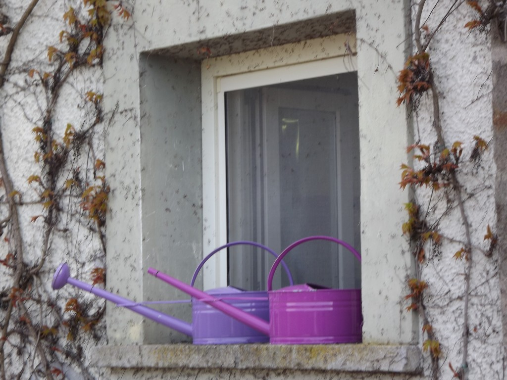 Peonie in fiore e annaffiatoi alla finestra!