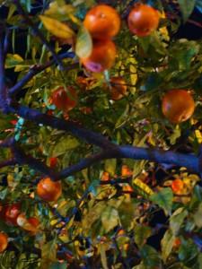 aranci alla Festa dei Limoni di menton