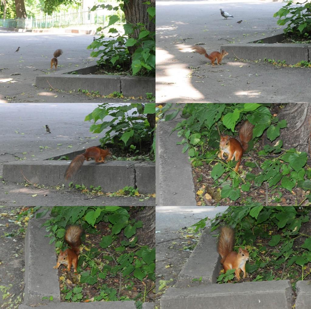 collage scoiattolo