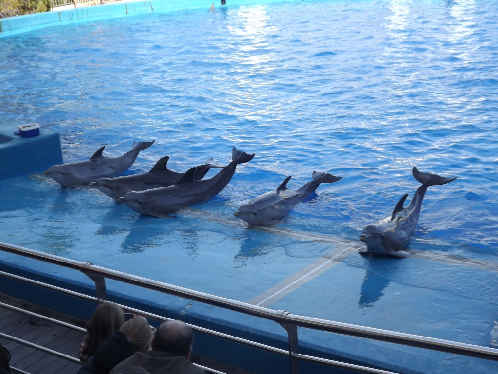 Oceànografic Valencia vasca con i delfini