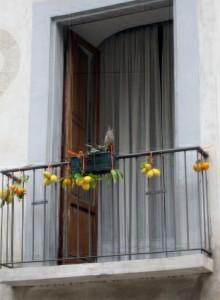 Balcone addobbato per la sagra degli agrumi