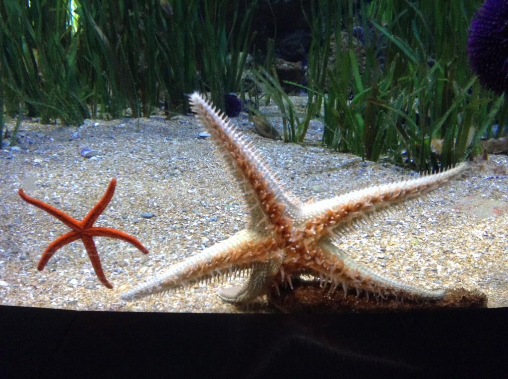 Oceànografic Valencia stelle marine