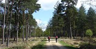 Londra alternativa: la New Forest