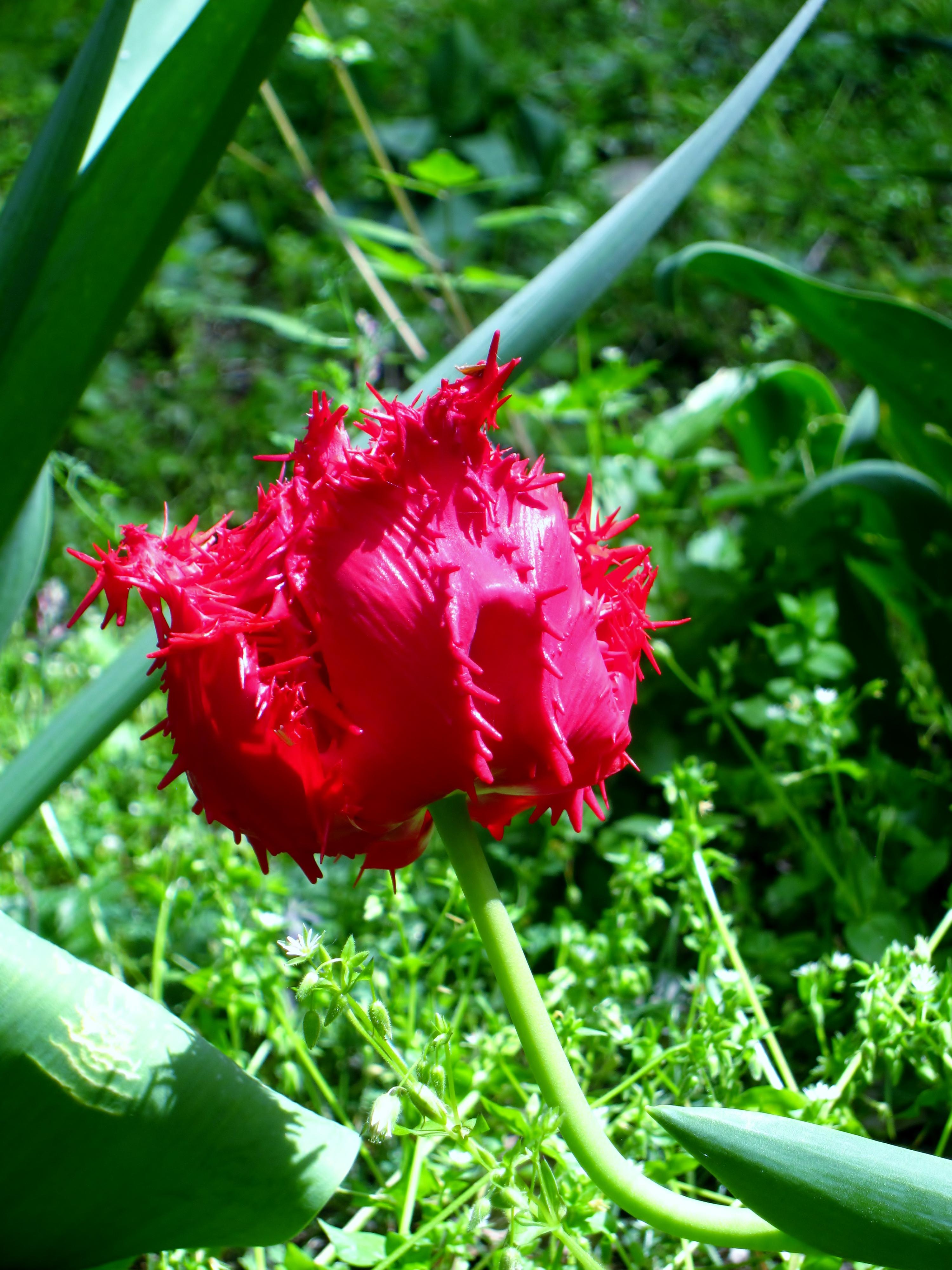 Gazebo da giardino brico for Torrisi arredi giardino catania