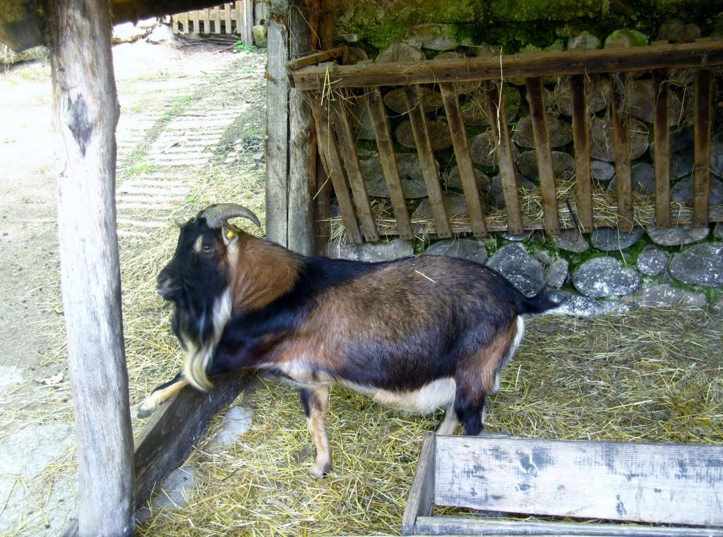 Nella fattoria degli animali...