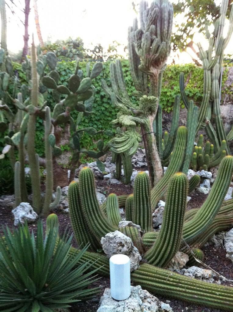 piante-grasse-orto botanico-del-salento
