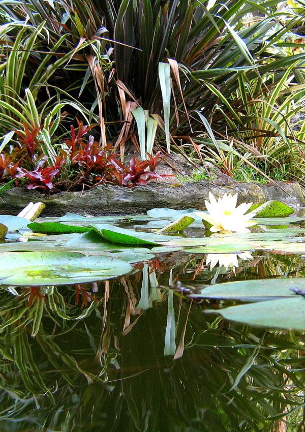 Giardini La Mortella: il paradiso segreto dell'isola di Ischia