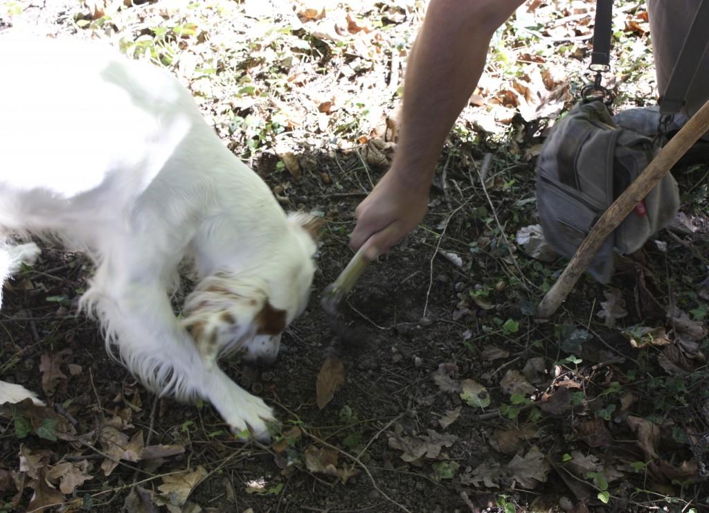 La piccozza usata per scavare il tartufo