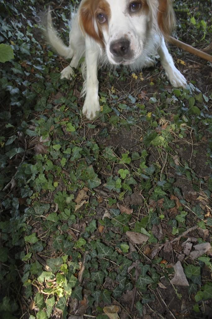 Birba cerca di sfuggire alla macchina fotografica