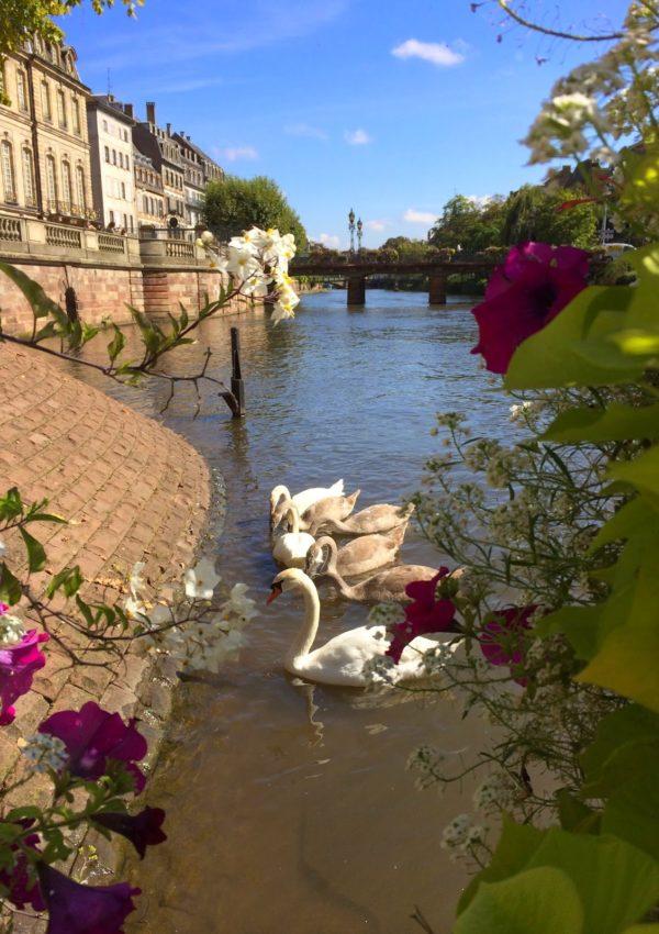 Cosa visitare a Strasburgo: la Grande Ile