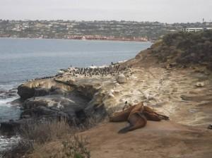 panorama della costa presso san diego california