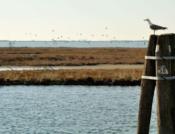 Esplorare la laguna sud di Venezia in battello