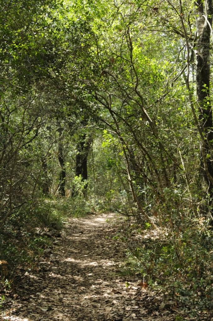 Picnic al Bosco Pianelle in Puglia