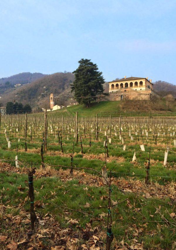 Villa dei Vescovi: un soggiorno nella storia