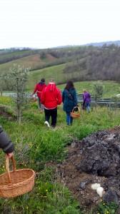 Inizia la ricerca delle erbe commestibili