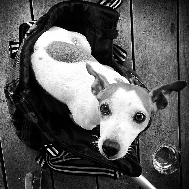 dog_dogs_dog