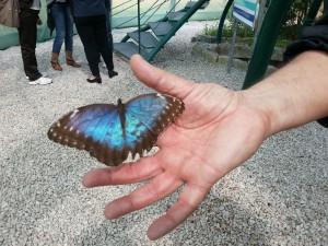 una farfalla della casa delle farfalle a Castelgrande