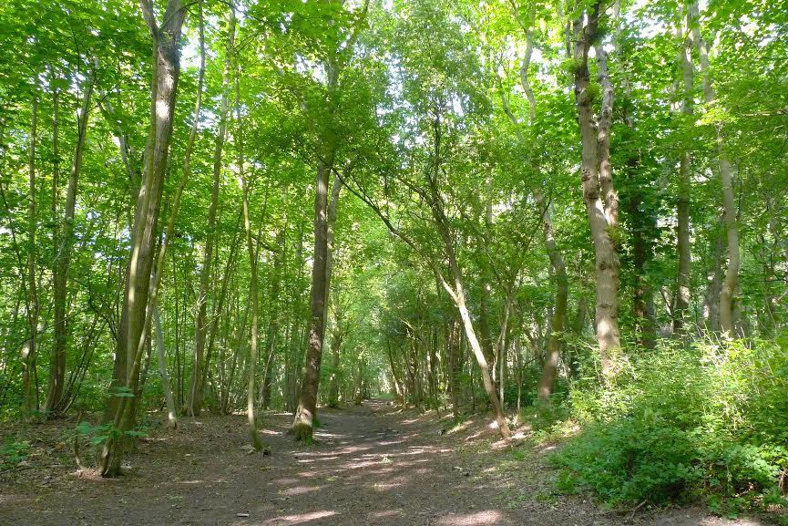 bosco bredene