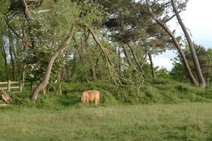 riserva naturale di Zwin a Knokke