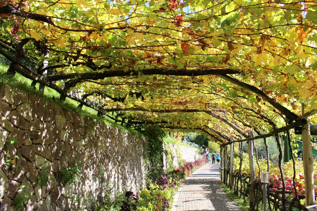 vigna dei giardini di Castel Trauttmansdorf in autunno