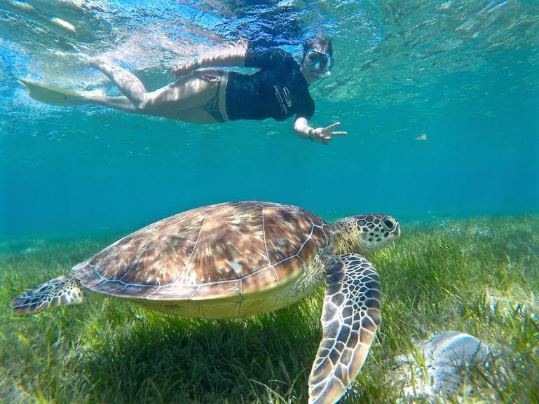 Foto. Tartaruga marina, Green Island