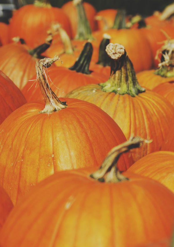 Sagre d'autunno in Italia (e il tema #insiders di novembre)