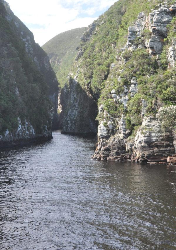 Tsitsikamma National Park: il polmone verde sulle coste del Sudafrica