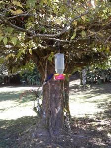 colibri Violet SOBRE WINGS