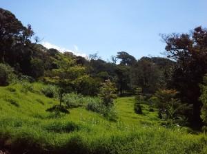 monteverde foresta