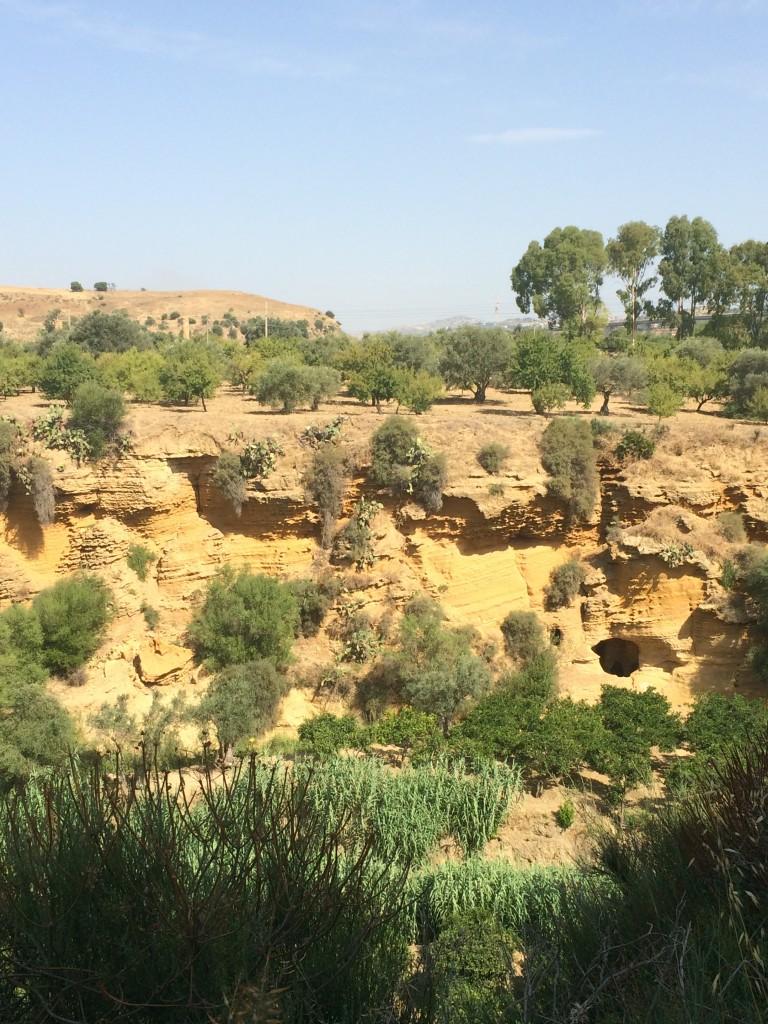 vegetazione valle dei templi agrigento