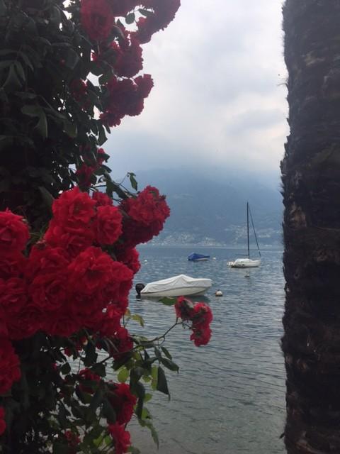 lago di locarno fiori