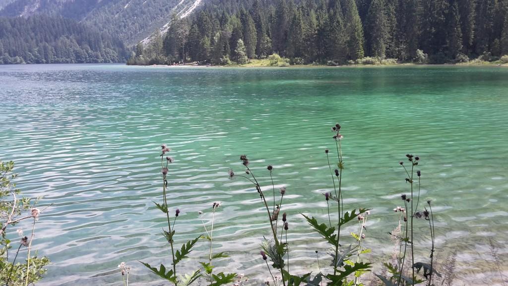 vegetazione sul lago di tovel