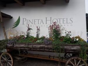 pineta hotels foto