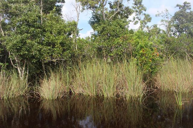 Un' escursione di mezza giornata da Miami: alle Everglades