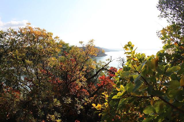 vegetazione del sentiero di rilke in autunno